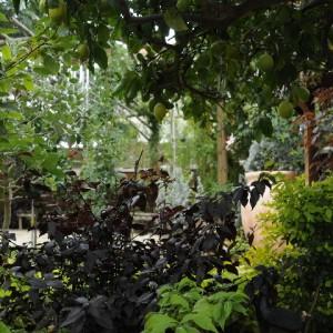 עיצוב גינות פרטיות בשילוב צמחייה צבעונית