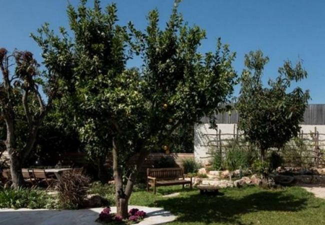 יצירת צל עם צמחיה בתכנון אדריכלי