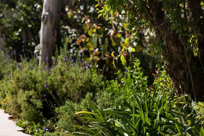 אדריכלות נוף עם צמחיה ירוקה
