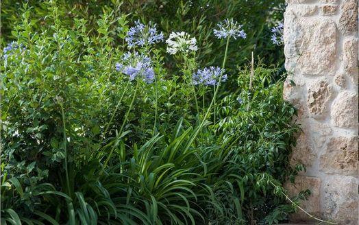 הגינה של איתי והדר