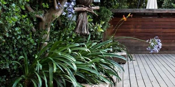 עיצוב ייחודי לגינה בבית פרטי