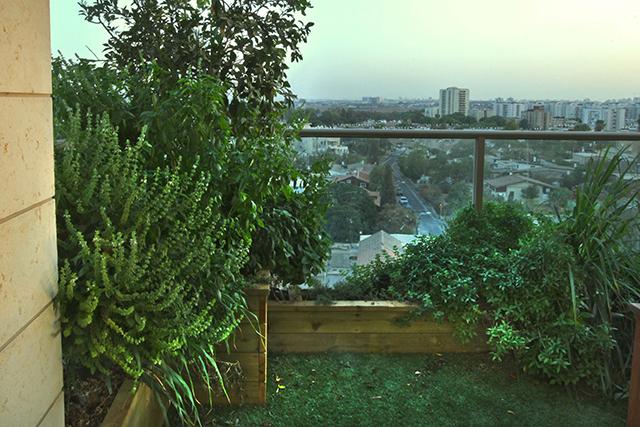 גינת גג הכוללת דשא