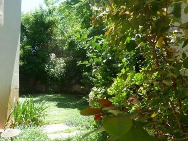 עץ פרי בגינה פרטית