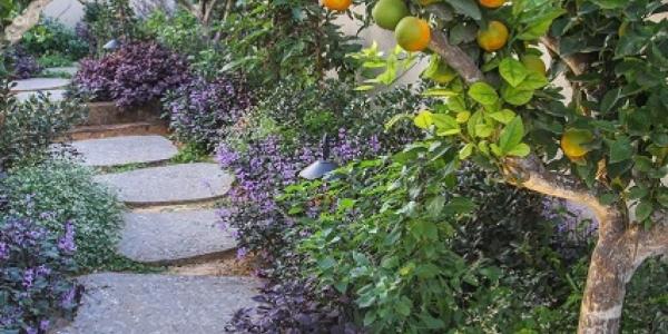 עיצוב גינה ביתית עם עצי פרי