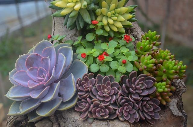 צמחים חסכוניים במים