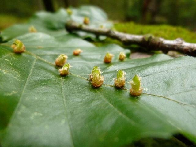 מזיקים לצמחייה בגינה