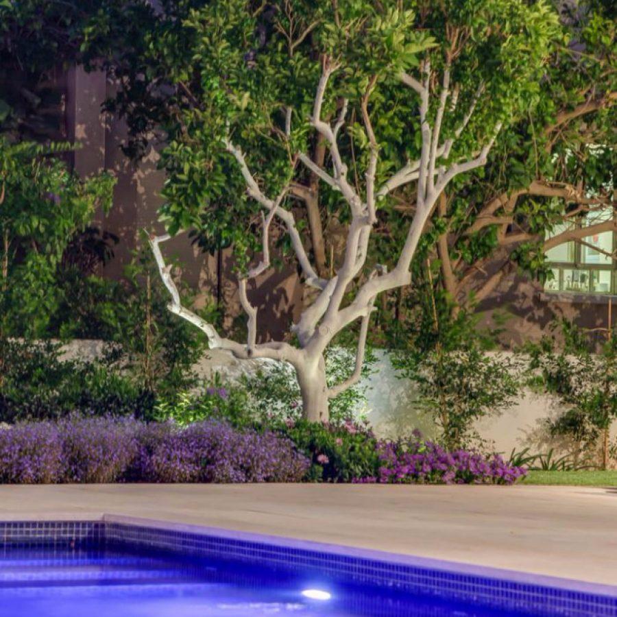 תאורה בגינה וברקע עץ תות