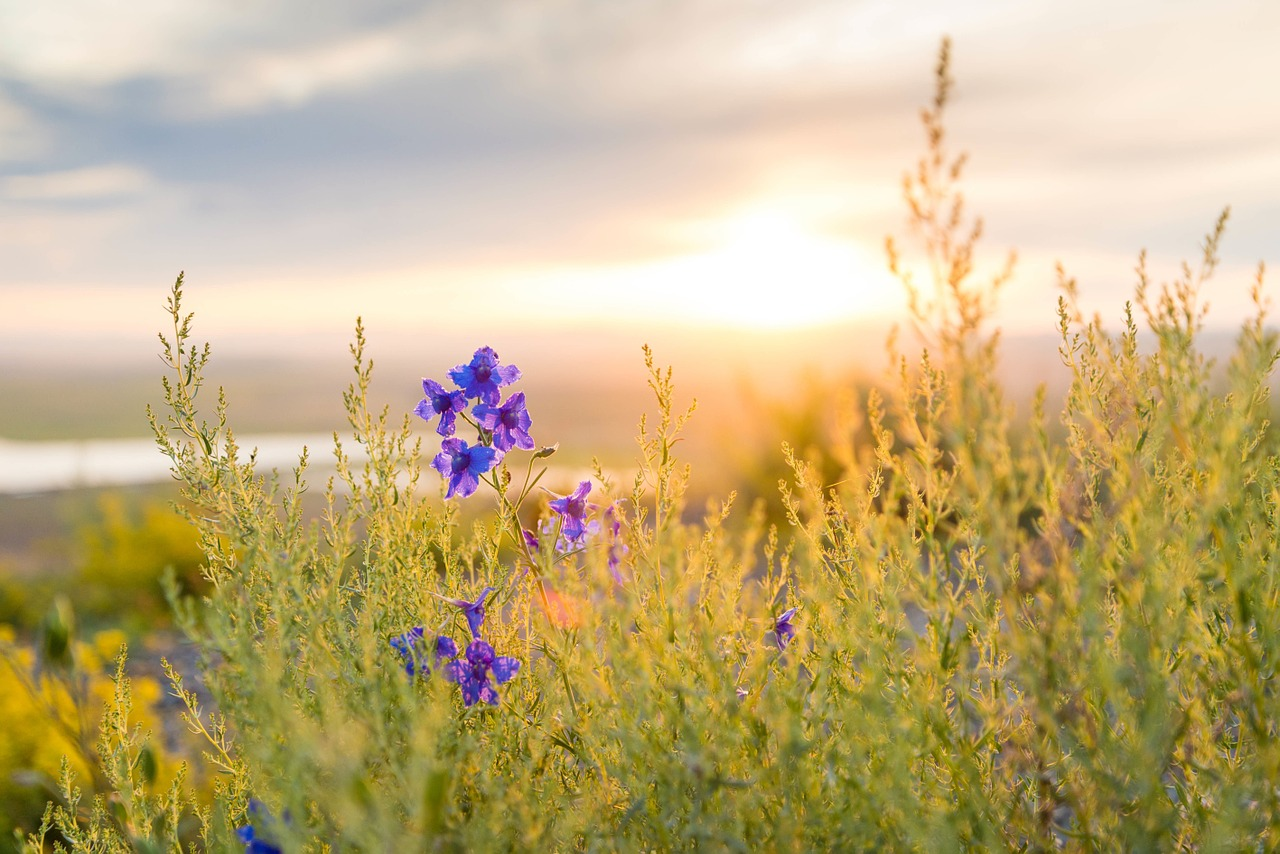 עיצוב גינה אקולוגית נותן לטבע לעשות את שלו