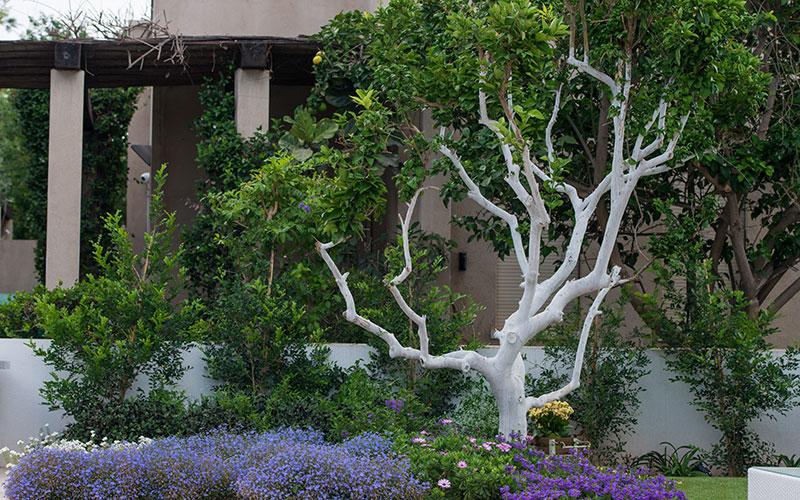 הגינה של משפחת צ'רניאק