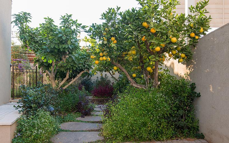 הגינה של משפחת טויסטר