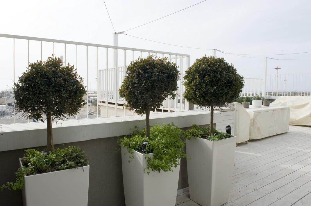 עיצוב גינת גג למשפחת ברון