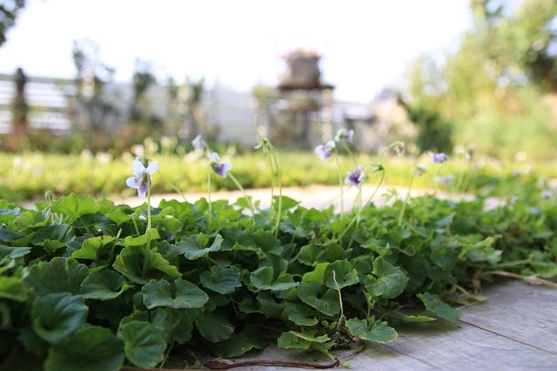 הגינה המעוצבת של אורי וענת