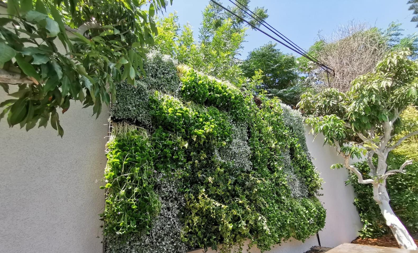 קיר ירוק – ביתה של אדריכלית…