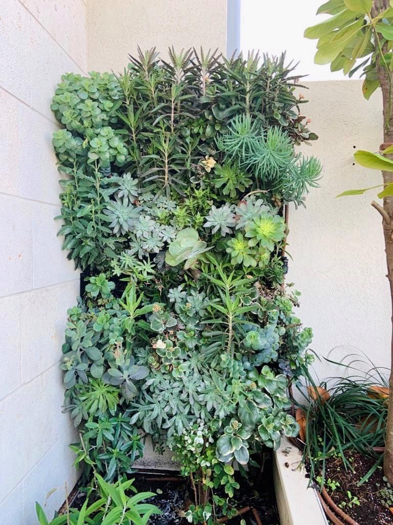 קיר ירוק בניחוח צרפתי…