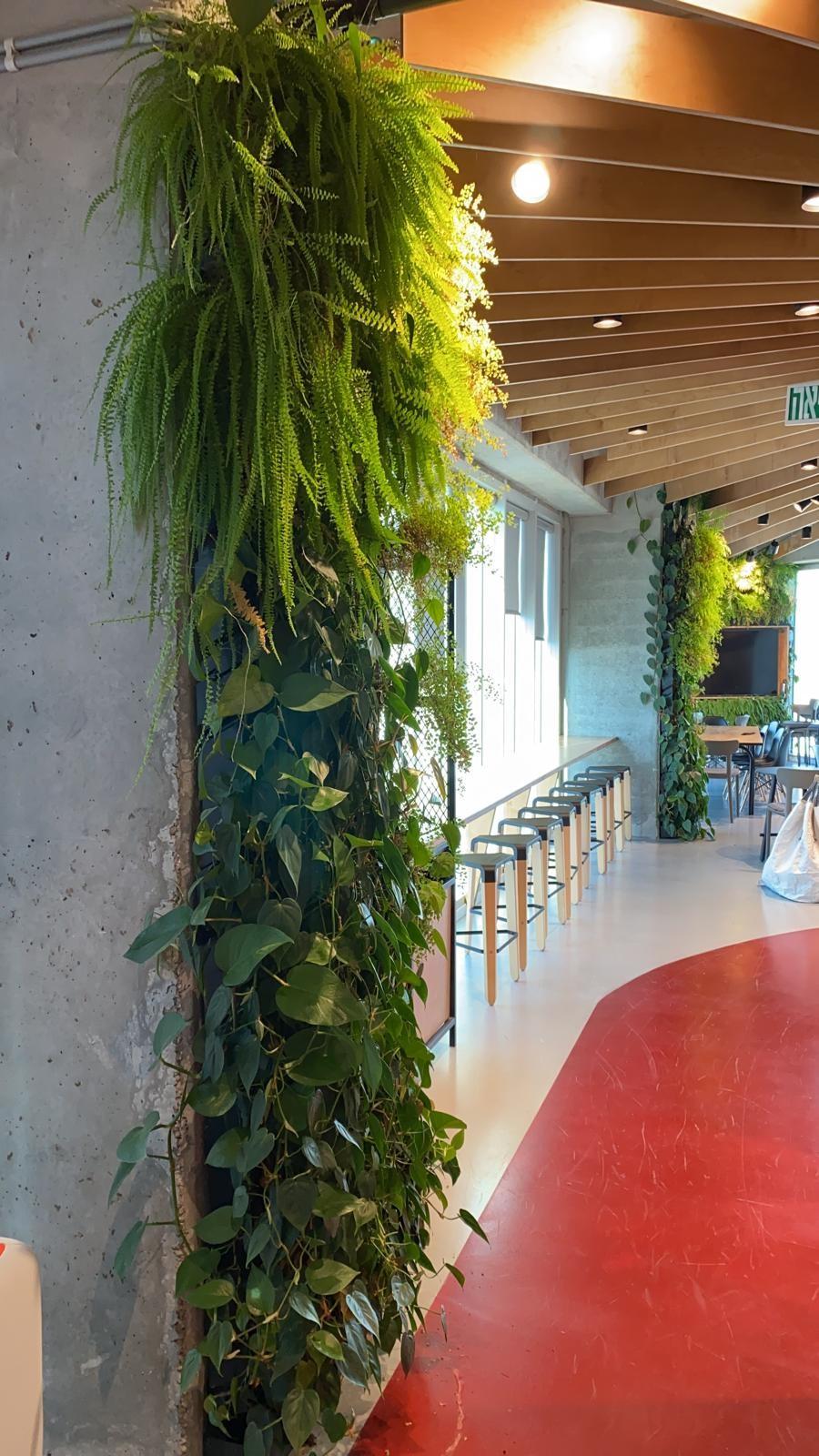 קיר ירוק בלב המשרד…