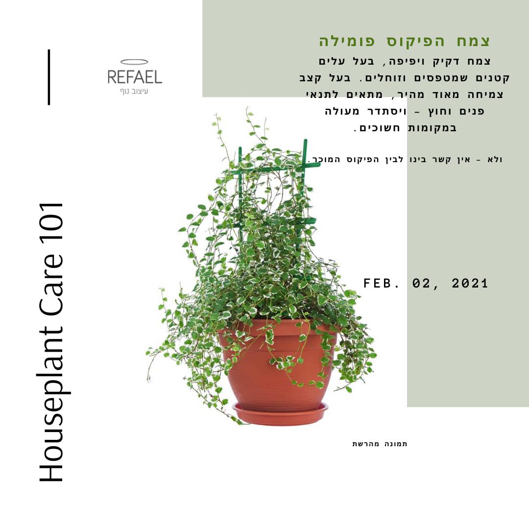 צמחי בית #2