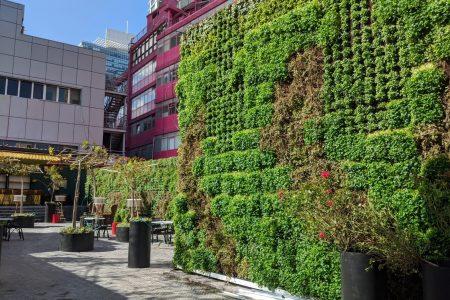קיר ירוק במלון BOBO