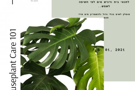 צמחי בית…