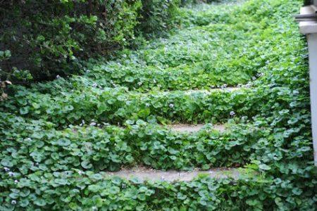 עיצוב הגינה של דורית ונמרוד